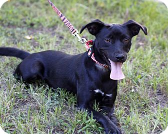 Labrador Retriever Mix Dog for adoption in East Hartford, Connecticut - Happy-pending adoption