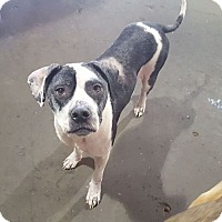 Adopt A Pet :: Hope - Conroe, TX