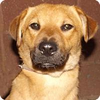 Adopt A Pet :: Kiwi - Oxford, MS