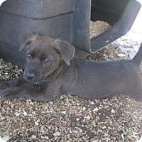 Adopt A Pet :: Tayden - Rocky Mount, NC