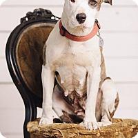 Adopt A Pet :: Sandy - Portland, OR