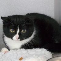 Adopt A Pet :: Trudy - Saskatoon, SK