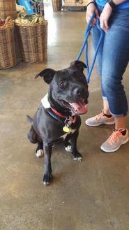 Labrador Retriever/Boxer Mix Dog for adoption in Burlington, North Carolina - R2