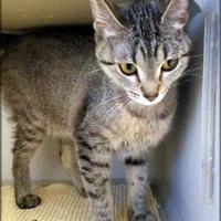 Adopt A Pet :: Lofty - Ottumwa, IA