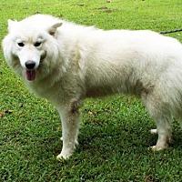 Adopt A Pet :: SAMMY BOY - Franklin, TN