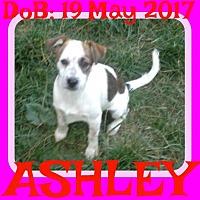 Adopt A Pet :: ASHLEY - Sebec, ME
