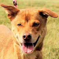 Adopt A Pet :: **FAIBEL** MEET SEPT 23RD! - Mukwonago, WI