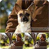 Adopt A Pet :: Paco - Phoenix, AZ