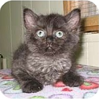Adopt A Pet :: Jill - Shelton, WA