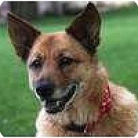 Adopt A Pet :: Princess - Plainfield, CT