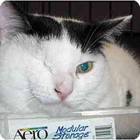 Adopt A Pet :: Hook - Riverside, RI