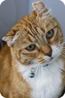 Domestic Shorthair Cat for adoption in Portland, Oregon - Vinny