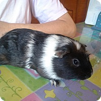 Adopt A Pet :: Pepper - San Antonio, TX