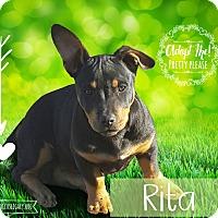 Adopt A Pet :: Rita - West Hartford, CT