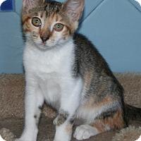 Adopt A Pet :: Curry - Santa Rosa, CA