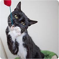 Adopt A Pet :: Tux - Corinne, UT