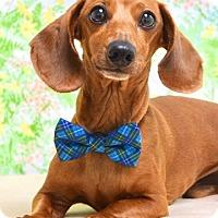 Adopt A Pet :: Wendell - Dublin, CA