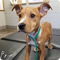 Adopt A Pet :: Prim - Newcastle, OK