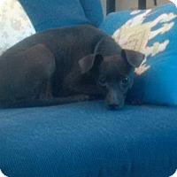 Adopt A Pet :: April - Bridgeton, MO