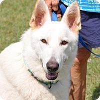 Adopt A Pet :: Taze - Dripping Springs, TX