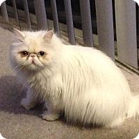 Adopt A Pet :: Kayla - Beverly Hills, CA