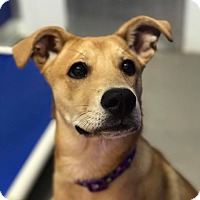 Adopt A Pet :: Nugget - Red Wing, MN
