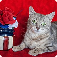 Adopt A Pet :: Ariana II - Muskegon, MI