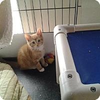 Adopt A Pet :: Papaya - Middletown, CT