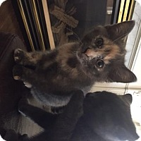 Adopt A Pet :: Lilly - Cambridge, ON