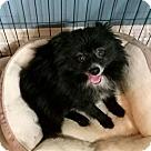 Adopt A Pet :: Danny Boy