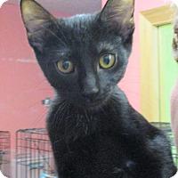 Adopt A Pet :: Siri - Reeds Spring, MO