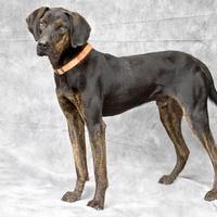 Adopt A Pet :: Luke - Cashiers, NC