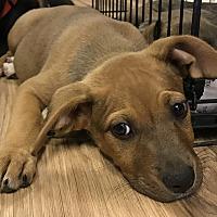 Adopt A Pet :: Tracker - Gainesville, GA