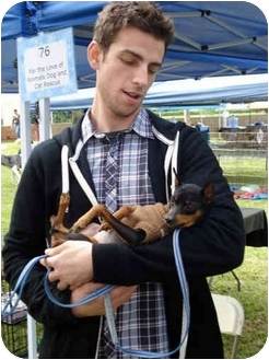 Miniature Pinscher Mix Dog for adoption in San Dimas, California - Fritz