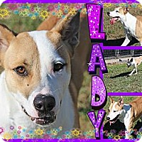 Adopt A Pet :: Lady - Tampa, FL