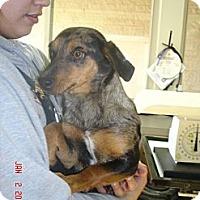 Adopt A Pet :: Ava - Stilwell, OK