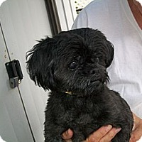 Adopt A Pet :: Nelly - West Bloomfield, MI