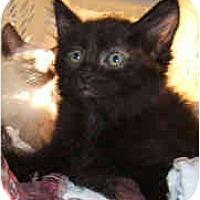 Adopt A Pet :: Cola - Dallas, TX