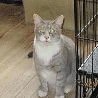Adopt A Pet :: Osen - Monroe, CT