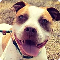 Adopt A Pet :: Boja - Charlotte, NC