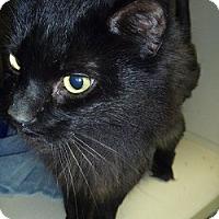 Adopt A Pet :: Shiloh - Hamburg, NY