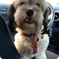 Adopt A Pet :: Bon Bon - Encinitas, CA