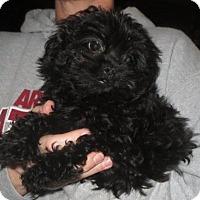 Adopt A Pet :: Ella - Greenville, RI