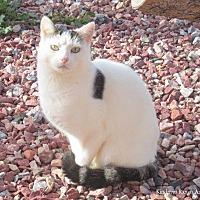 Adopt A Pet :: Bianca - Hartville, WY