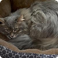 Adopt A Pet :: Deven - Medina, OH