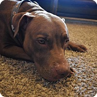 Adopt A Pet :: Riley - Broken Arrow, OK