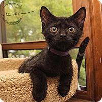 Adopt A Pet :: A..  Slater - Charlotte, NC