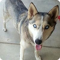 Adopt A Pet :: Glitter - Apple valley, CA