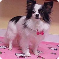 Adopt A Pet :: Missy - 5 lbs. - Dahlgren, VA