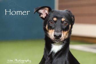 Terrier (Unknown Type, Small)/Miniature Pinscher Mix Dog for adoption in Merriam, Kansas - Homer